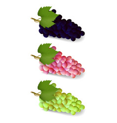 set bunch of grapes vector image