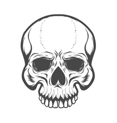 Skull isolated on white background design vector