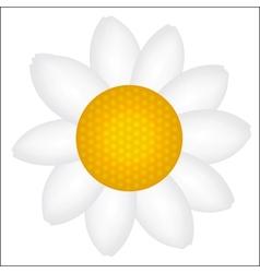 Beautiful Daisy icon vector image