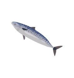 Blue swimming mackerel big predatory fish vector