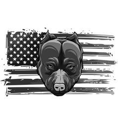 Design head bully dog with american flag vector