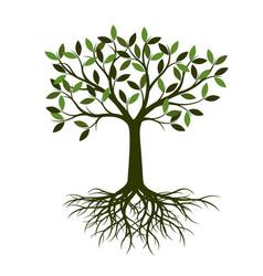 green summer tree vector image