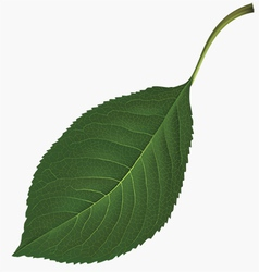 Leaf vector image