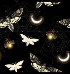 Pattern with death head hawk moth vector