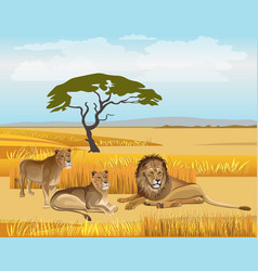 Pride lions in the savanna vector