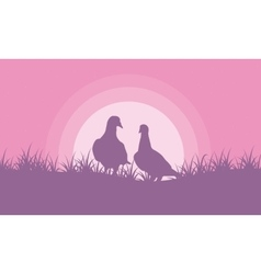 Romance dove on hill valentine theme vector image