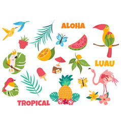 big set of tropical birds and elements vector image vector image