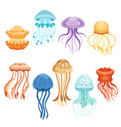 Colorful jellyfish set swimming marine creatures vector
