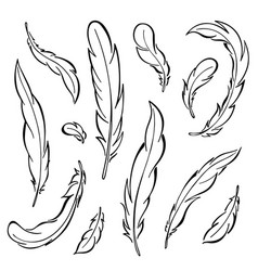 feathers rooster set vector image