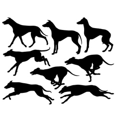 Greyhound dog silhouettes vector