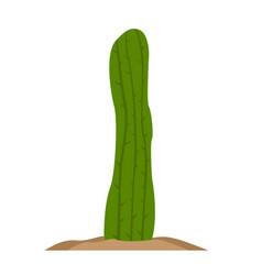 Isolated retro cactus icon vector