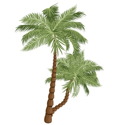 Two Palm Trees4 vector image