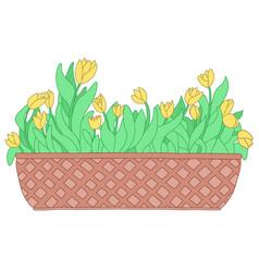 Cartoon yellow tulip in long flower box vector