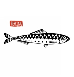 Herring black and white vector