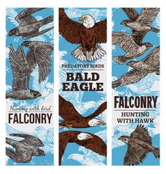 Predatory birds sketch eagle or falcon hunt vector