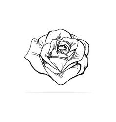 rose icon concept for design vector image