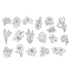 Set of beautiful monochrome flowers lily tulip vector