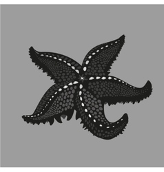 black starfish on isolated background tattoo vector image