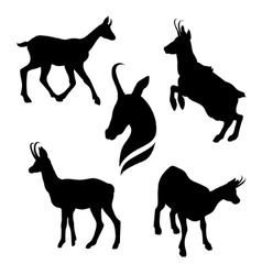 Chamois set vector image