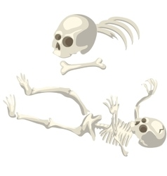 Human skeleton and bones different parts of body vector
