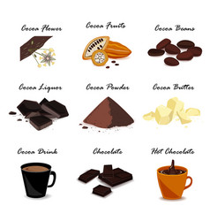 super food with cocoa pod beans cocoa butter vector image