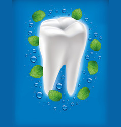 White tooth with fresh mint leaf and water drops vector