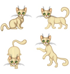 Kitten in different poses vector image