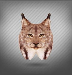 abstract triangle polygonal lynx abstract vector image