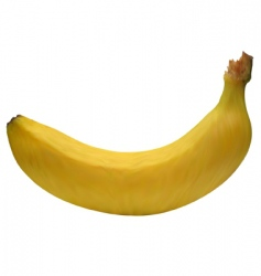banana mesh vector image