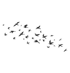 flying bird free birds flock in flight black vector image