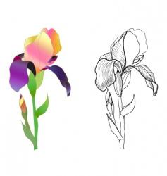 iris monochrome vector image