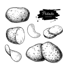 Potato drawing set Isolated potatoes heap vector image