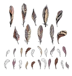 Set with bird feathers vector image