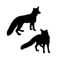 standing red fox vector image