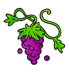 Textured cartoon doodle of grapes on vine vector
