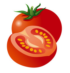 two tomatoes vector image