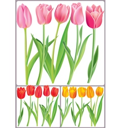 Beautiful tulips in different color vector image