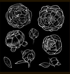a set of botanical pions vector image