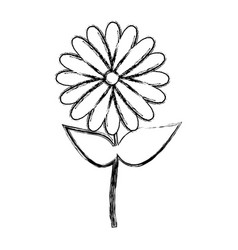 blurred silhouette sunflower floral icon design vector image