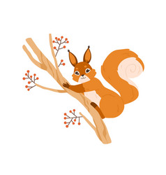 cute happy squirrel on rowan tree branch adorable vector image