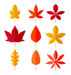 set autumn leaves in flat style design element vector image