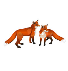 two red foxes vector image