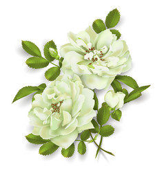 realistic white rose 3d roses vector image