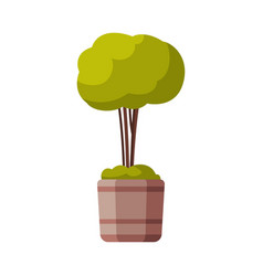 decorative tree in flowerpot green potted plant vector image