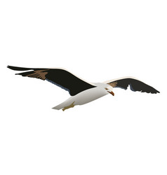 Hovering gull bird with outspread black wings vector