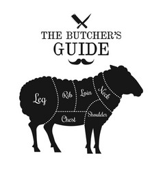 mutton and lamb cut lines diagram graphic poster vector image