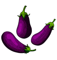 Set eggplant in engraving style design vector