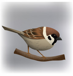 Sparrow bird vector