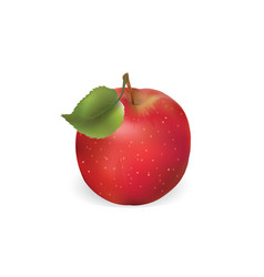apple is isolated on a white background vector image