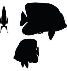 Angelfish silhouette vector